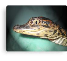 Baby Gator Canvas Print