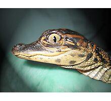 Baby Gator Photographic Print