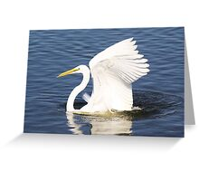 Pretty Great White Egret Greeting Card