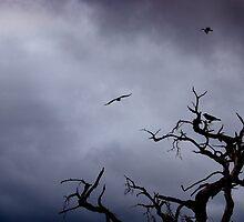shore birds by Naia