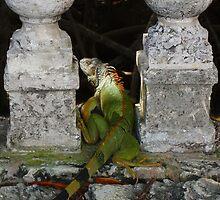 Green Iguana by Jayne Le Mee