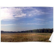 Deer in open meadow - Danes Dyke Poster