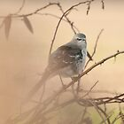 MOCKINGBIRD ON A FOGGY MORN by RGHunt