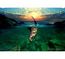 Blissful Photographic Print