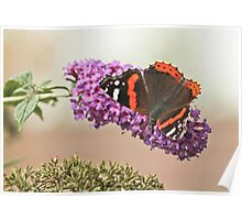 Autum Butterfly Poster