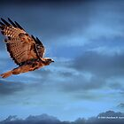 HAWK IN FLIGHT by Charlene Aycock IPA