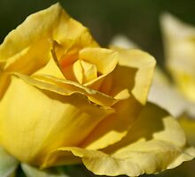 Yellow Rose by Michael Beckett
