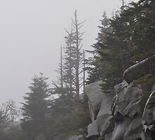 Foggy Mountain Morning by JECunningham