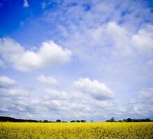 Big Blue Sky by Sarah Price