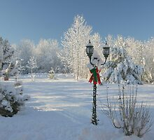 Winter Wonderland of White - Featured Photo & 1st Place Challenge Win! by AliceMc