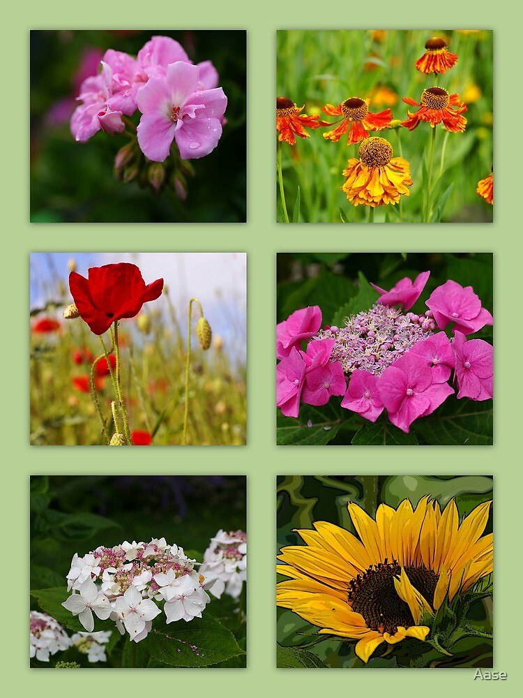 Flowers by Aase