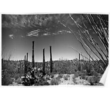 The Desert in Arizona Poster