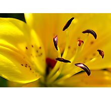 Summer Lily Photographic Print