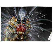 Festive Caterpillar Poster