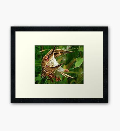 Once upon a Milkweed... Milkweed whimsy Framed Print