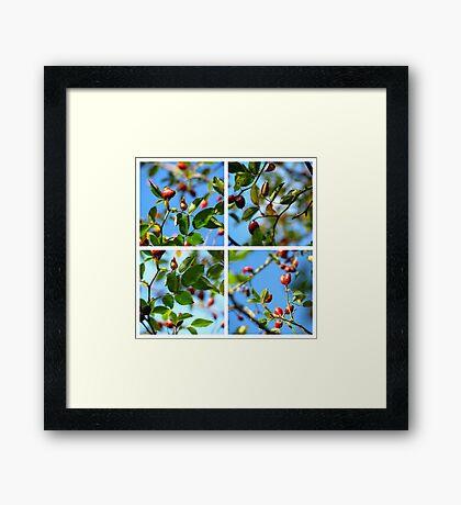 Rosehips - Polyptych Framed Print
