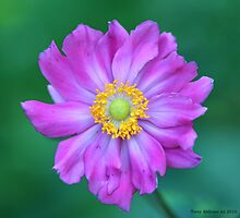 Flower by Terry Aldhizer