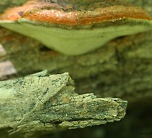 Wolf In Bark Under Fungus On Wood by Terry Aldhizer