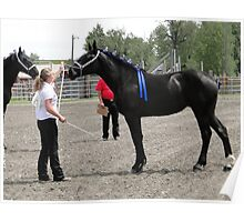 Percheron Mare Beauty II Poster
