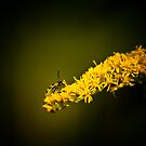 In its Yellow World by Phillip M. Burrow