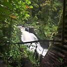 Rain Forest FNQ by David Haworth