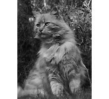 Posing Puss Photographic Print