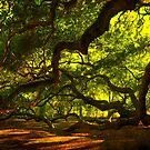 Side arms of the Angel Oak in Charleston by Susanne Van Hulst