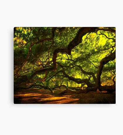 Side arms of the Angel Oak in Charleston Canvas Print