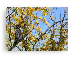 Ladder-backed Woodpecker ~ Female Canvas Print
