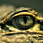 Eye of the Gator by Dennis Stewart