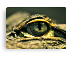Eye of the Gator Canvas Print