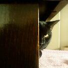 the stare by catnip addict manor