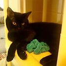 strike a pose by catnip addict manor