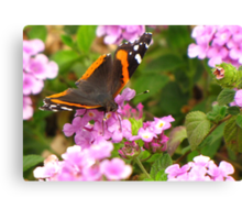 Butterfly ~ Red Admiral II Canvas Print