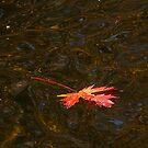 Solo River Run by enchantedImages