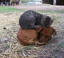 catdog by catnip addict manor
