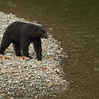 BLACK BEAR by Sandy Stewart