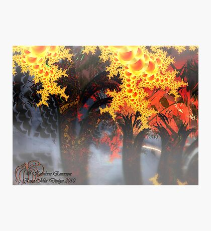 Haunted Forest Photographic Print