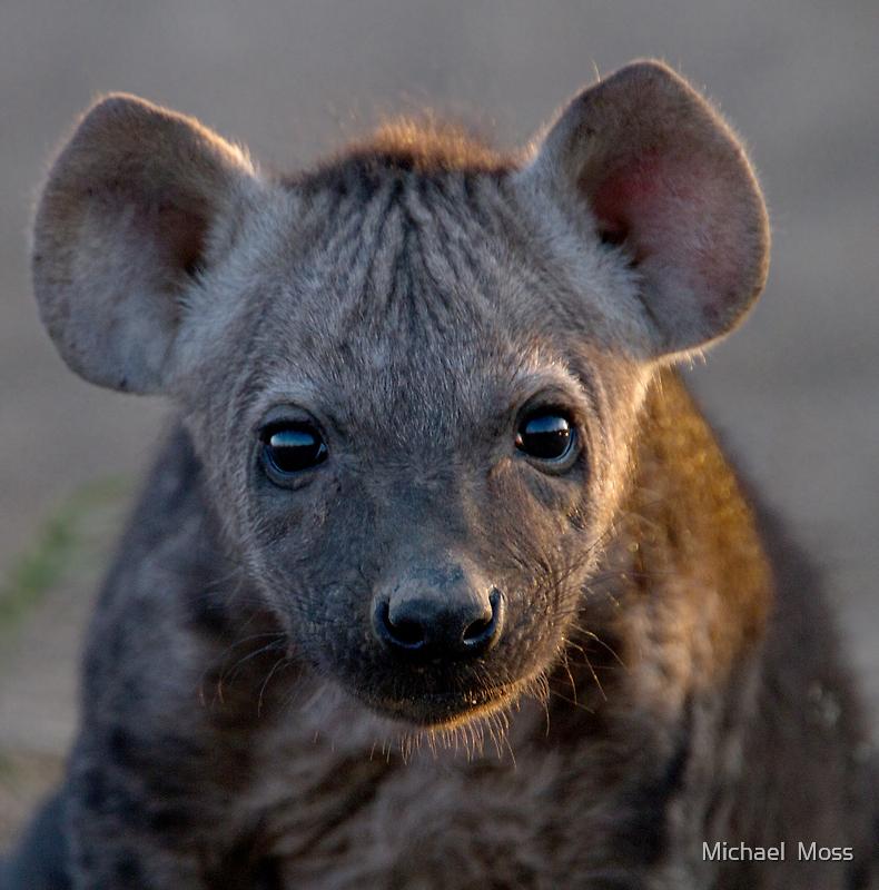 Hyena Cub by Michael  Moss