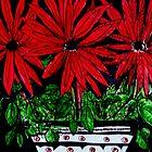 Poinsiettias in White Tub by Angela Gannicott