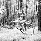 White Grass by David Schroeder