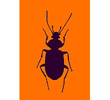 Beetle silhouette Photographic Print