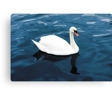 White swan on blue lake Canvas Print