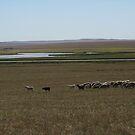 Hulunbuir Grasslands by nicolaMY