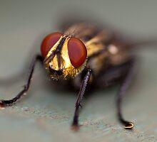 The Magic Fly by Paul Davis