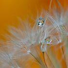 Droplets by Daniel Spruce