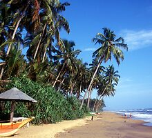 Sandy beach and palm trees in Sri Lanka by Chris L Smith