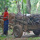 Daily Life in Zanzibar - The Wood Carter by Adrian Paul