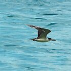 Gull in Flight by warmonger62