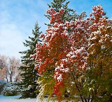 Snow Colours by Sandra Parlow